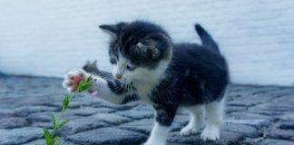 cat 2536662 1920