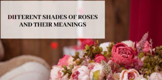 DIFFERENT SHADES OF ROSES AND THEIR MEANINGS