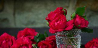 roses 821705 1920